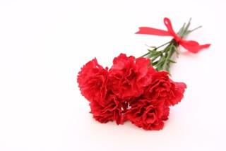 母の日の由来は?赤いカーネーションを贈るのはなぜ?