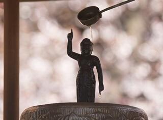 花まつりの由来は?お釈迦様の像に甘茶をかけるのはなぜ?